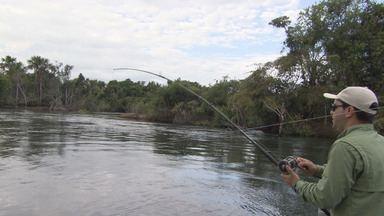 """Pesca de trairões em um rio que """"pega fogo"""" no Mato Grosso (Bloco 02) - No rio Claro, peixes bons de briga e um rio cujas águas se incendeiam."""