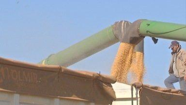 Conab estima produção de 9,4 milhões de toneladas na segunda safra de milho em MS - O primeiro levantamento previa que o estado colhesse 9,2 milhões de toneladas, mas novo levantamento aumentou essa estimativa.