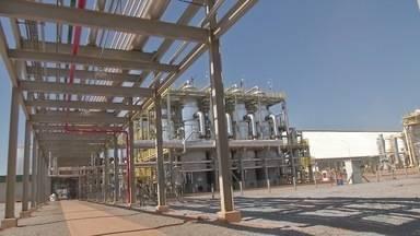 Fábrica de etanol de milho começa a operar - A fábrica instalada em Lucas do Rio Verde tem capacidade para moer cerca de 600 mil toneladas de milho por ano.