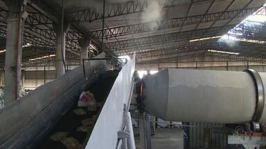 Polícia incinera 2 toneladas de drogas, em Manaus - Entorpecentes foram apreendidos entre abril e julho deste ano, no Amazonas.