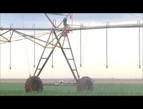 Com uso de irrigação, agricultores conseguem enfrentar seca e manter produção - Projetos de irrigação deve ser feito por profissionais autorizados.