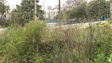 Moradores conseguem anular multa por deixarem mato alto nos terrenos particulares - A Justiça está anulando multas aplicadas pela CMTU a moradores que não roçaram o mato.