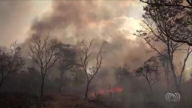 Série Cerrado em Chamas mostra danos que o fogo pode causar a fauna e a flora - Série Cerrado em Chamas mostra danos que o fogo pode causar a fauna e a flora