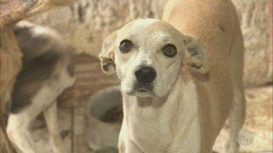 Casal responsável por cães abandonados responderá por maus-tratos - Ao todo, 41 cães continuam à espera de um novo lar em Piracicaba.