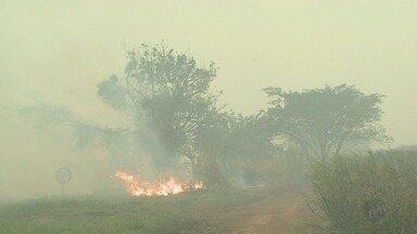 Incêndio fecha Rodovia Maurílio Biagi e causa congestionamento em Pontal, SP - Na Rodovia Anhanguera (SP-330), Corpo de Bombeiros também teve dificuldade para apagar as chamas em canavial.