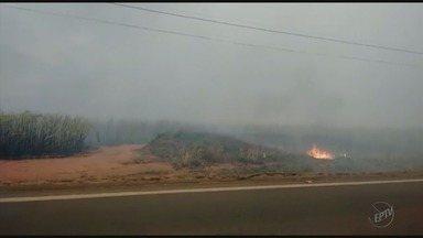Incêndio destrói mais de 400 hectares de mata nativa em Passos (MG) - Incêndio destrói mais de 400 hectares de mata nativa em Passos (MG)