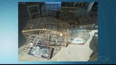 Polícia Ambiental apreende animais silvestres em Baixo Guandu, ES - Pena para esse tipo de crime varia de 6 meses a 1 ano de prisão.