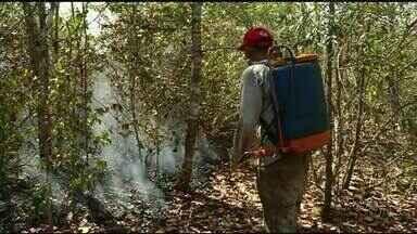 Moradores fazem mutirão para combater incêndio em chácaras próximo de Araguaína - Moradores fazem mutirão para combater incêndio em chácaras próximo de Araguaína
