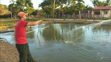 Projeto investe na criação de peixes - Projeto investe na criação de peixes.