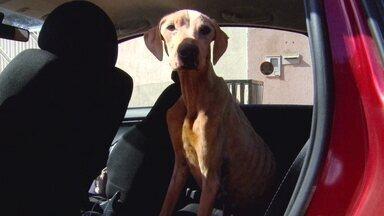 Cadela mantida presa sem água e sem comida no Jardim Ingá é resgatada - Segundo a Polícia, o dono da casa e o vigia serão indiciados, independentemente de quem seja o dono da cadela.
