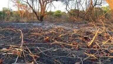 Cantão é uma das áreas mais afetadas pelas queimadas no Tocantins - Cantão é uma das áreas mais afetadas pelas queimadas no Tocantins