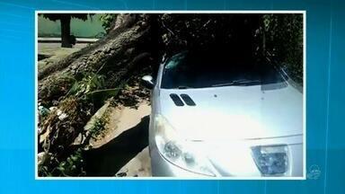 Árvore cai sobre carro com motorista dentro - Leia mais notícias em G1.globo.com/ce