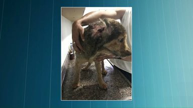 Três pessoas sofrem queimaduras graves ao tentar cuidar de ferida de cachorro - Elas tentavam tratar a feriada com um pesticida altamente inflamável. Para acalmar o animal usaram uma arma de choque. E foi aí que houve uma explosão.