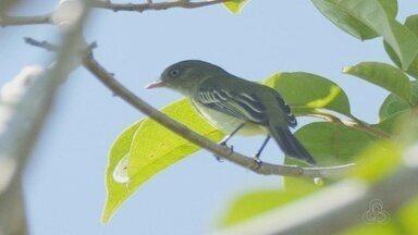 Relatório apresenta mais de 380 espécies descobertas na Amazônia entre 2014 e 2015 - Documento foi lançado nesta quarta-feira (30).