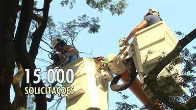 Prefeitura de Maringá tem 15 mil pedidos de corte de árvores - Computadores portáteis devem agilizar o serviço