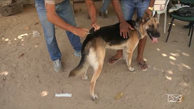 Animais são vacinados no dia 'D' de vacinação contra a raiva em Caxias - Cães e gatos deverão ser vacinados nos postos de saúde da cidade, que vão funcionar até às 17h horas.