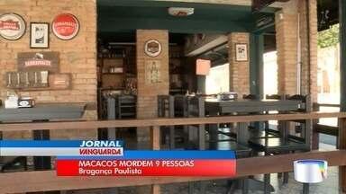 Bragança Paulista é invadida por macacos - Eles já morderam nove moradores nos últimos 20 dias.