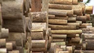 Excesso de eucalipto no mercado desfavorece produtores - Excesso de eucalipto no mercado desfavorece produtores