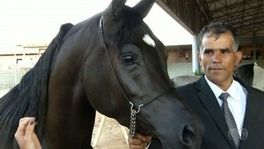 Anápolis recebe exposição de cavalos árabes - Animais saíram de várias partes do país para participar.