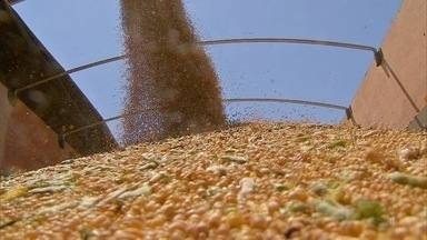 Produção de grãos ajuda a impulsionar crescimento do PIB agropecuário em MS - No segundo trimestre de 2017, o setor cresceu 14,9% em comparação com o mesmo período do ano passado. A produção de milho e soja foram os grandes responsáveis por esse bom desempenho.