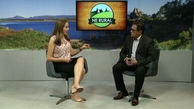 Superintendente de negócios explica como funciona a renegociação no BNB - Veja mais em g1.com.br/ce