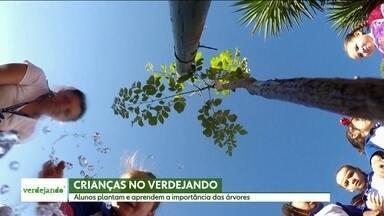 Guarulhos recebe a 5ª edição do projeto Verdejando - Começa nesta segunda (11) a 5ª edição do projeto Verdejando. Nessa edição, serão feitos plantios de árvores fora de São Pulo, em algumas cidades da região metropolitana.