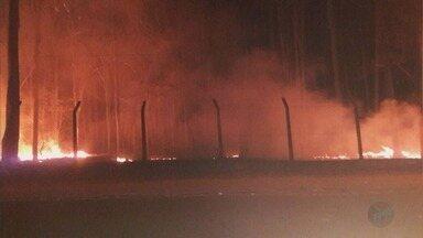 Incêndio atinge Bosque de Batatais, SP, e causa destruição nesta terça-feira (12) - Fogo durou 40 minutos e foi combatido pela Brigada da Guarda Civil Municipal.