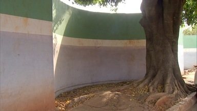 Moradores de Campo Grande reclamam do serviço de poda de árvores - Quem tem árvore grande perto de casa, que causa problemas, reclama que o serviço de poda de árvores da prefeitura de Campo Grande não funciona a contento.