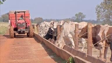Preço da arroba sobe, mas pecuaristas não têm animais prontos para abate em MS - O preço da arroba do boi gordo subiu 18,4% em Mato Grosso do Sul.