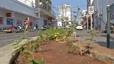 Canteiros de avenidas de Corumbá são alvos de vandalismo - Vândalos estão destruindo as mudas de plantas que estão sendo plantas pela prefeitura nos canteiros de Corumbá. Situação é revoltante.