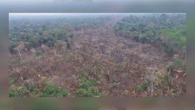 Operação da polícia prendeu invasores em área de preservação permanente - Uma área de floresta da reserva foi devastada.