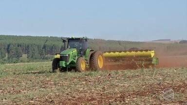 Agricultores aproveitam umidade no solo para semear soja em MS - A preocupação dos agricultores é conseguir semear toda área dentro do período considerado ideal.
