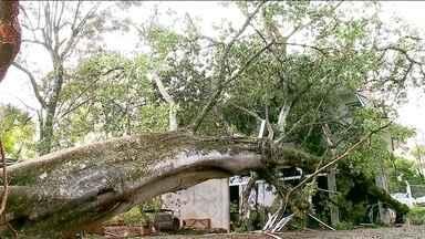 Chuva no Sul: 25 cidades em situação de emergência - Chove há três dias no Rio Grande do Sul, 67 cidades foram atingidas; 25 já decretaram situação de emergência.