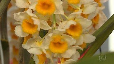 Belo Horizonte sedia 38ª Feira Nacional fr Orquídeas - Evento segue até domingo (15) no Minascentro.