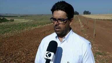 Pragas na lavoura de soja são preocupação entre produtores de Uberlândia - Especialistas da Embrapa orientaram agricultores sobre o programa Campo Limpo e o controle das ervas daninhas.