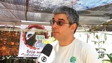 Veja como participar da campanha para preservar o pássaro soldadinho-do-araripe - Saiba mais em g1.com.br/ce