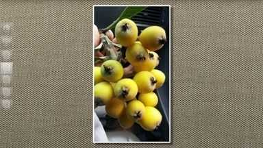 Fruto da nêspera ou ameixa-amarela é doce e levemente ácido - Segundo o agrônomo, o fruto também chamado de ameixa ou ameixeira, é usado no preparo de sucos, geleias e licores.