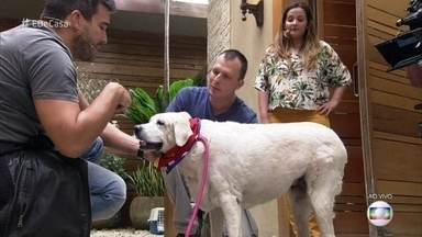 Alexandre Rossi ensina como identificar se cães e gatos estão acima do peso - Obesidade é uma das principais causas de doença entre animais de estimação