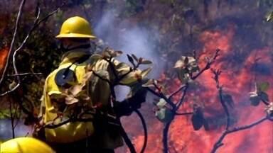 Bombeiros e moradores combatem incêndio na Chapada dos Veadeiros - Fantástico acompanhou trabalho de quem arrisca vida para controlar o fogo. Polícia investiga se origem da queimada na reserva ambiental foi criminosa.