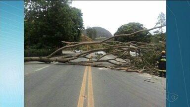 Árvore cai e bloqueia pistas da BR-101, em Ibiraçu, no ES - Trânsito precisou ser desviado no km 213, por volta das 12h desta quinta-feira (2).