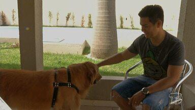 """Comunicação entre dono e animal vai além dos interesses instintivos, aponta pesquisa - Com petiscos ou não, cães demonstram empolgação com a presença do dono e """"pedem"""" carinho."""