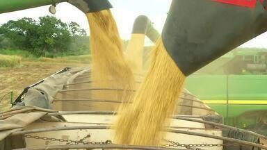 Produtores de soja estão otimistas com exportações - Produtores de soja estão otimistas com exportações