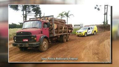 37 toras de Araucária são apreendidas em Palmas - O motorista do caminhão foi detido.