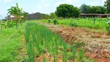 Programa auxilia agricultores em produção de alimentos orgânicos - Um programa do Governo do Estado auxilia os agricultores a entrarem no mercado de produção de alimentos orgânicos.