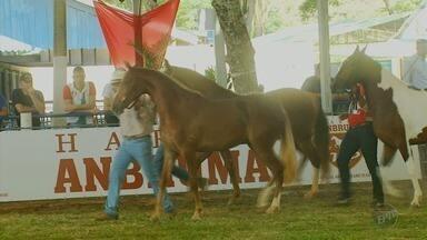 Caxambu (MG) recebe o 31º Campeonato Brasileiro de Mangalarga Marchador - Caxambu (MG) recebe o 31º Campeonato Brasileiro de Mangalarga Marchador