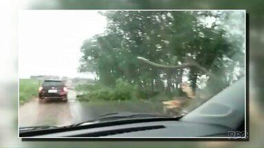 Chuva e ventos provocam queda de árvores em rodovias da região - Veja a previsão no mapa.
