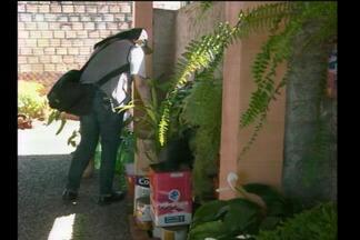 Dia D de combate à dengue em Santa Rosa, RS - O mutirão é para eliminar focos do mosquito.