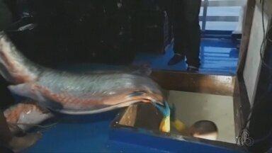 Toneladas de pescado são apreendidas em operação no interior do Amazonas - Ação ocorreu no município de Tefé.