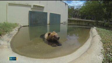 Justiça caça liminar que determina transferência da ursa Marsha - Justiça caça liminar que determina transferência da ursa Marsha