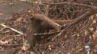 Prefeitura deixa sujeira em calçada da Vila Seixas, em Ribeirão Preto - Foi feito um corte de árvores, mas galhos foram deixados pelo caminho.